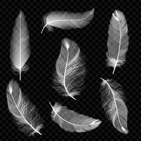 Piume realistiche Piuma di caduta dell'uccello bianco isolata sulla raccolta bianca di vettore del fondo. Illustrazione dell'uccello di piuma, piuma bianca morbida