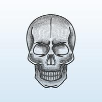 Skull Stipple Shading