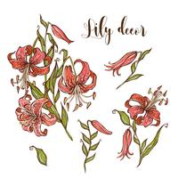 Set di fiori Tiger Lily per il vostro disegno. Illustrazione vettoriale