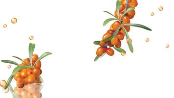 Sea buckthorn, yellow berries and green leaves