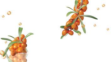 Olivello spinoso, bacche gialle e foglie verdi