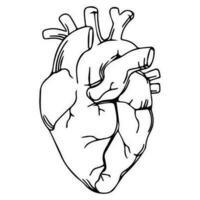 Realistisk hjärta skiss