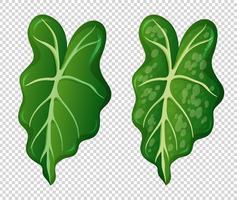 Twee patronen op groene bladeren