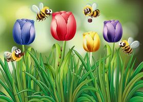 Bienen, die in den Tulpengarten fliegen
