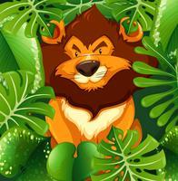 Leão selvagem no mato verde