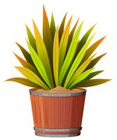 A plant in teh pot