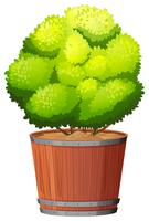 A plant in the pot