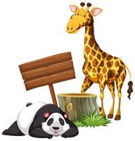 Panda and giraffe by the sign