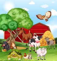 Animaux de la ferme vivant à la ferme