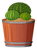 Cactusplant in pot