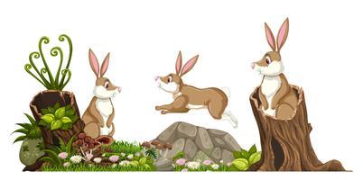 Rabbit in nature landscape