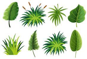 Un ensemble de feuilles de nature