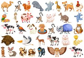 Set of different animals set