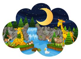 Wild animals in nature at night