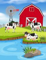 Conjunto de vacas en granja