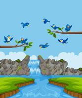 Birds in nature landscape
