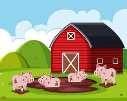Cerdo en la casa del granero
