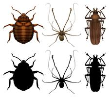 Set of many insect vector