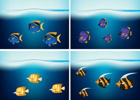 Four underwater scenes with different types of fish