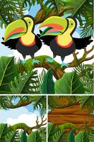Forest scenes with toucan birds vector