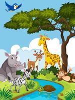 Animales salvajes en la naturaleza