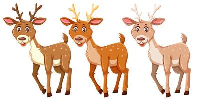 Set of cute deers  vector