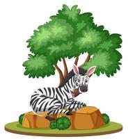 Una zebra in natura isolata