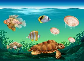 Underwater scene with many sea animals