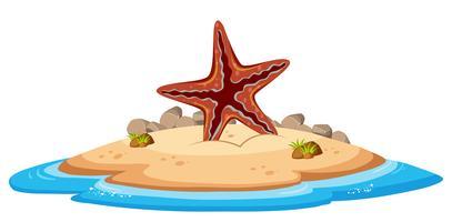 Étoile de mer isolée sur l'île