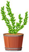 ormbunke i växtpotten