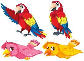 Set di diversi uccelli