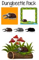 A pack of dung beetle
