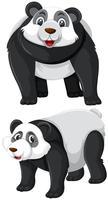Set di caratteri panda