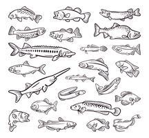 tipo de frutos do mar, peixe do mar mão desenhada coleção