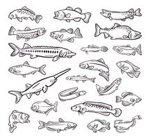 typ av havsmat, havsfiskhandgjord samling