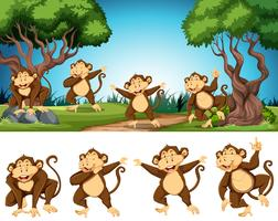 Group of monkey in nature