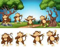 Gruppo di scimmie in natura