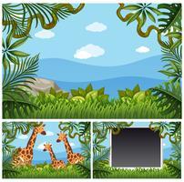 Bakgrundsmall med giraffer i skogen