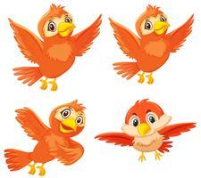 Set di simpatici uccelli arancioni