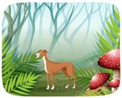 Hund in der Naturszene