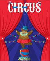 Bear Show Derrière Le Rideau De Cirque