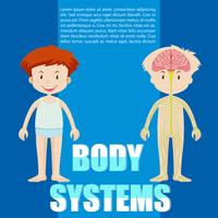 Infographic of boy and body system