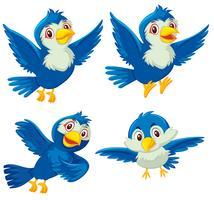 Ensemble de quatre oiseaux bleus