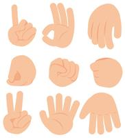 Hand Gesture on White Background vector