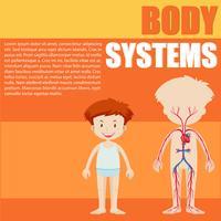 Jungen- und Körpersystemdiagramm