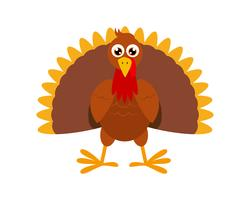 Vector Illustration of turkey bird cartoon character on white background