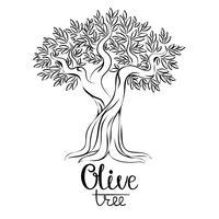 Olive träd vektor illustration. Olivolja. Vektor olivträd för etiketter, pack.