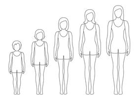 Women's body proportions changing with age. Girl's body growth stages. Vector contour illustration. Aging concept. Illustration with different girl's age from baby to adult.