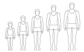 Man's body proportions changing with age. Boy's body growth stages. Vector contour illustration. Aging concept. Illustration with different man's age from baby to adult. European men flat style.