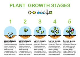 Plant growth stages infographics. Line art icons. Flat design.